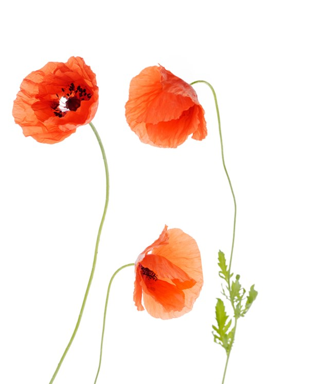 Remembrance Day 2017 The Royal Mint